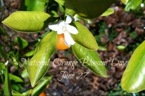 National Orange Blossom Day June 27